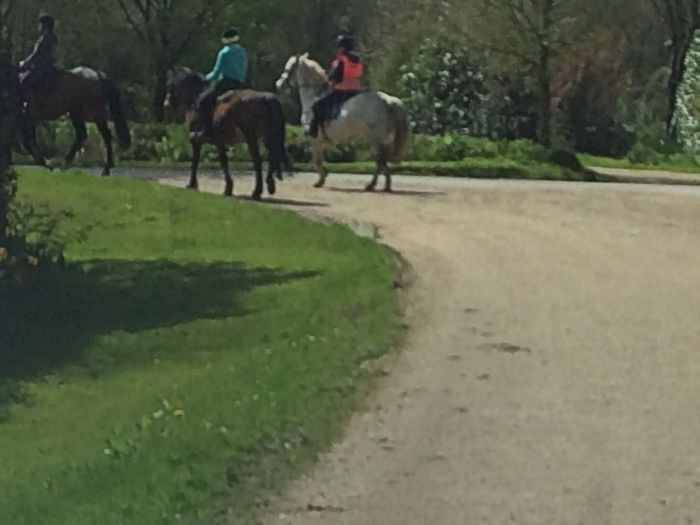 Horse Riders ed