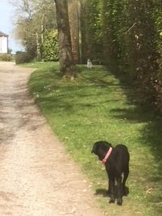 Cat Dog Walk
